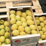 limones de marruecos