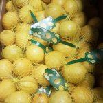 limon malla